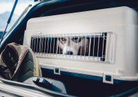 Hav din hund med overalt med et smart hundebur